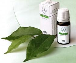 contrôle de la moisissure de l'arbre à thé