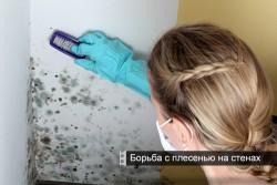 contrôle des moisissures sur les murs