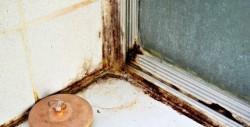 moisissure dans l'appartement 3