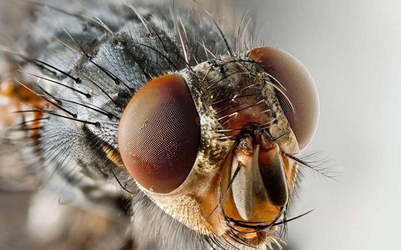 Comment se débarrasser des moucherons dans l'appartement: les fonds TOP-26