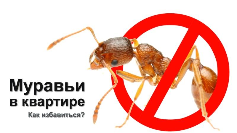 14 façons de se débarrasser des fourmis dans un appartement