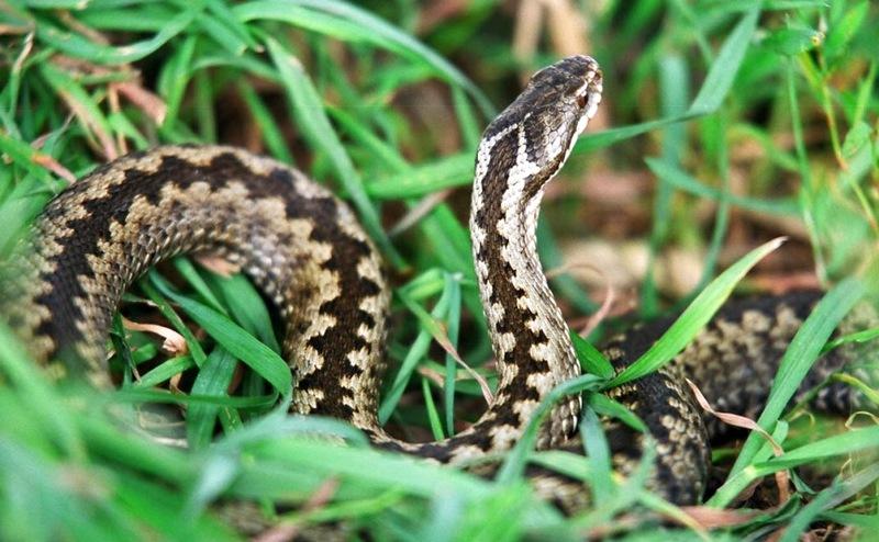 8 conseils pour chasser les serpents de la région