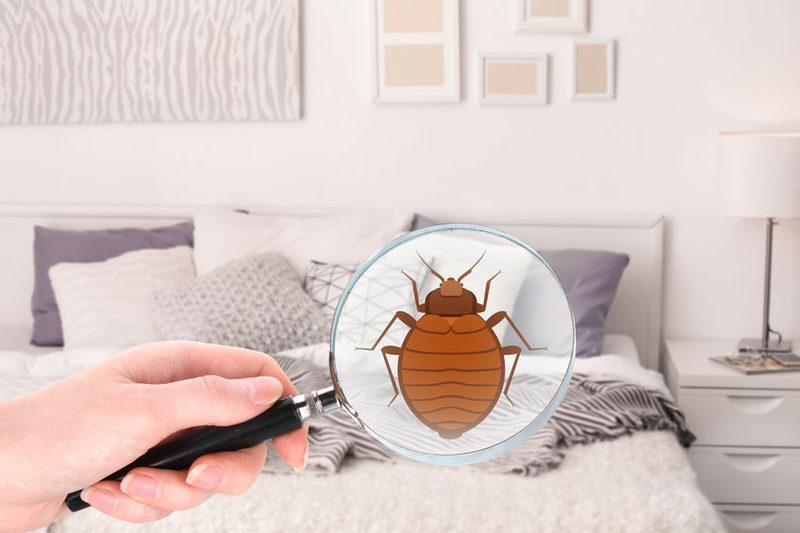 8 façons d'apporter des bugs à la maison