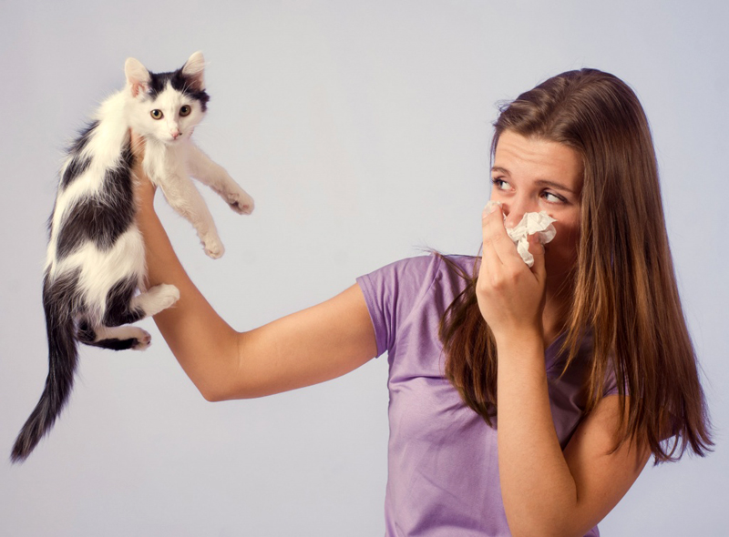 9 façons de se débarrasser de l'odeur d'urine de chat dans un appartement