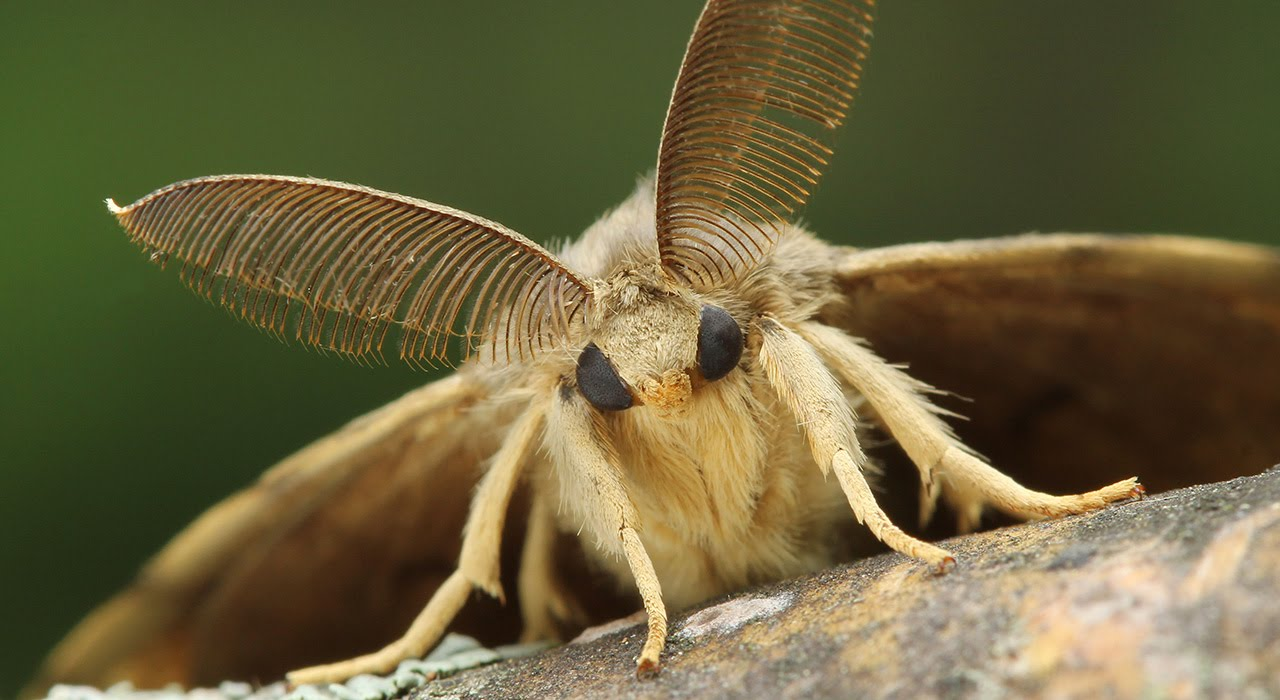 9 conseils pour se débarrasser des papillons de nuit dans un appartement