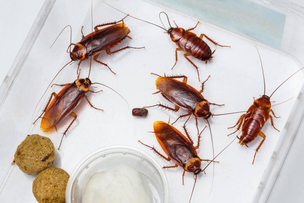 11 conseils pour se débarrasser des cafards dans la maison