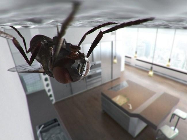 5 façons de se débarrasser des mouches dans la maison et au chalet